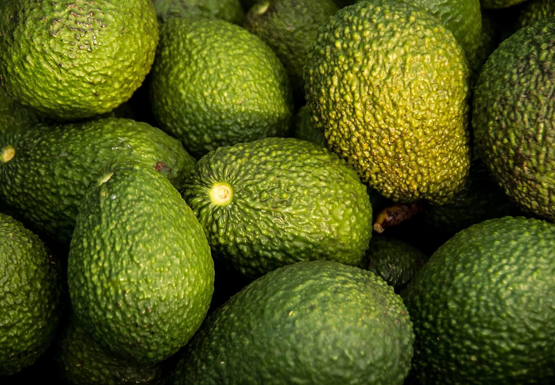 avocado titelbild